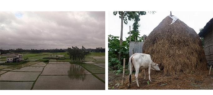 北部ボグラの田園風景と農村部の風景