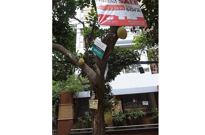 木になっているジャックフルーツ